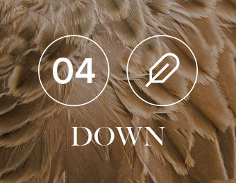 Down title on bed of brown down feathers.